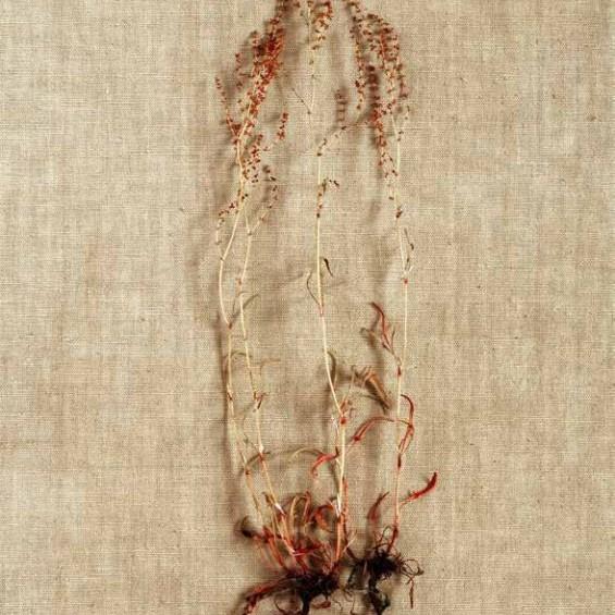 Kunstwettbewerb - Beitrag von Kyungwon Shin